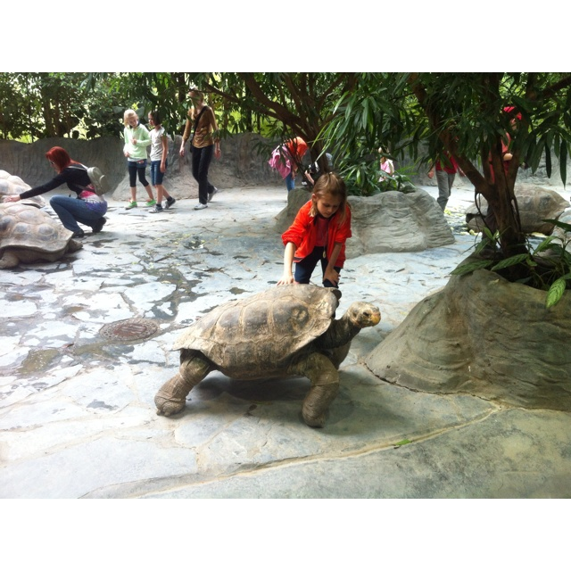 Childrens playing with giant turtles, Prague Zoo