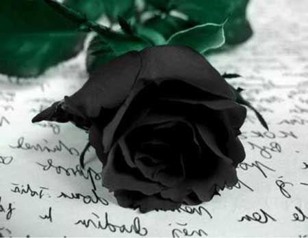 Flor Preta: Nomes, Tipos, de Luto, e Branca, Fotos, Dicas