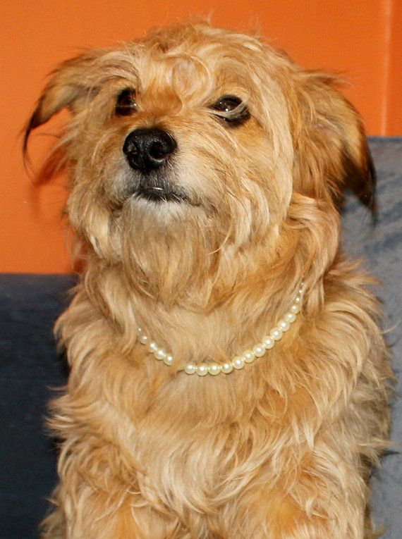 1000 Images About Pearl Dog And Cat Collars On Pinterest