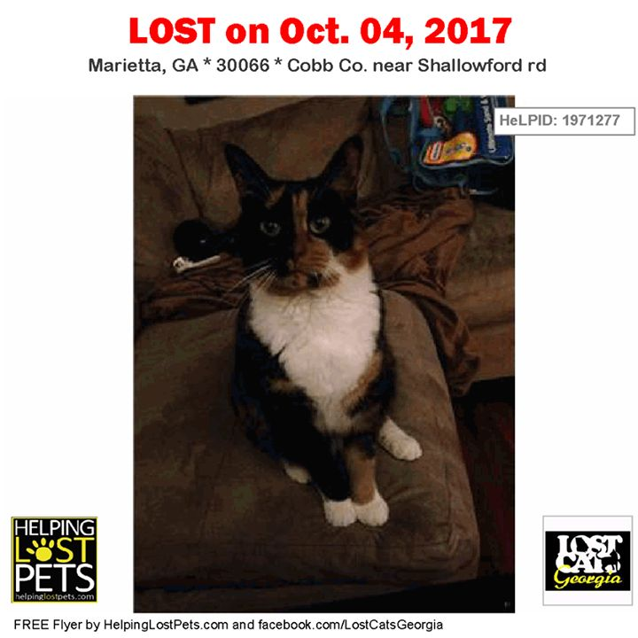 Lost Cat - Marietta GA - Oct.04 2017 Closest Intersection: Shallowford rd County: Cobb  #LOSTCAT #Rydia #Marietta (Shallowford rd)  #GA 30066 #Cobb Co.  #Cat 10-04-2017! Female #Tortoiseshell Black / White / Orange/Microchipped but unsure of number. I can get the record though.  CONTACT Phone: (706) 442-4425  More Info Photos and to Contact: http://ift.tt/2xi8pn7  To see this pets location on the HelpingLostPets Map: http://ift.tt/2yqu29Q  Let's get Rydia home! #lostcatsgeorgia…