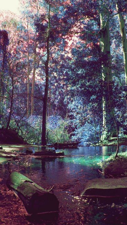 The woods- Taken at Tokai Forest