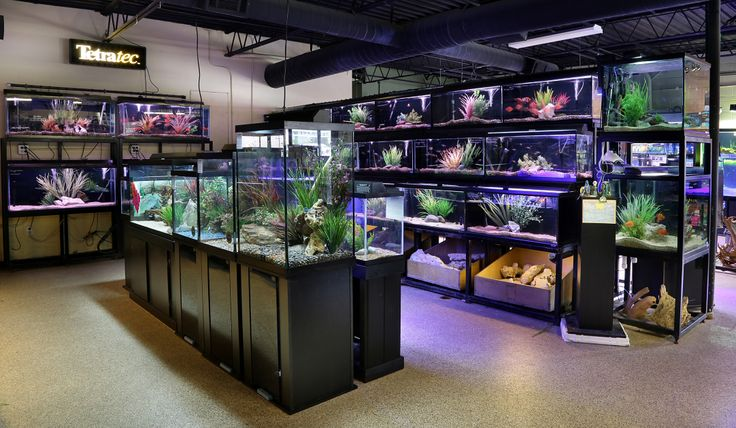 14 best dallas store images on pinterest dallas for Fish store dallas