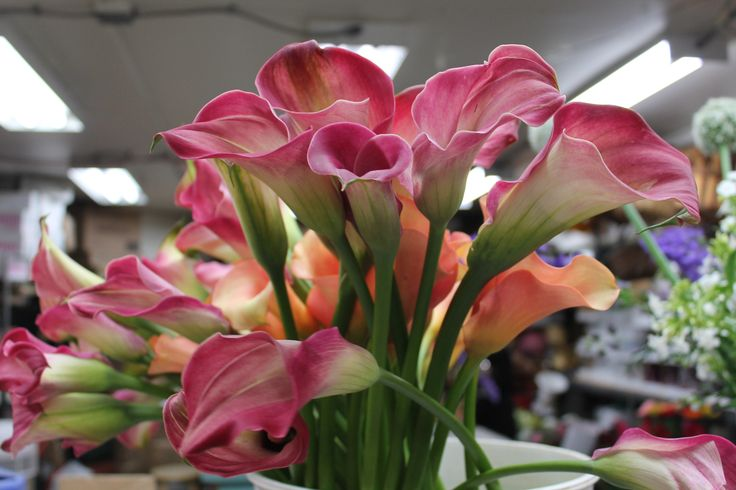 Our Cala Lilies say Good Morning #yyc! | In House Designs | Pinterest