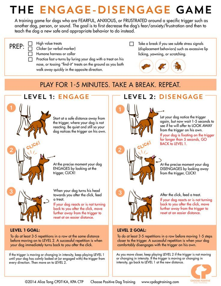 """Many #dogs cannot stay calm when they see another dog/person/somethg in their environment. They *react* instead of observe. These reactions are grouped into 4 behavior categories: -> Fight (barking, lunging) -> Flight (avoiding, hiding) -> Freeze (cowering, shutting down) -> Fool Around (jumping, mouthing) Positive reinforcement methods (ex. the """"Engage-Disengage Game"""") help dogs to become less anxious/fearful:http://www.clickertraining.com/reducing-leash-reactivity-the-engage-disengage-game"""