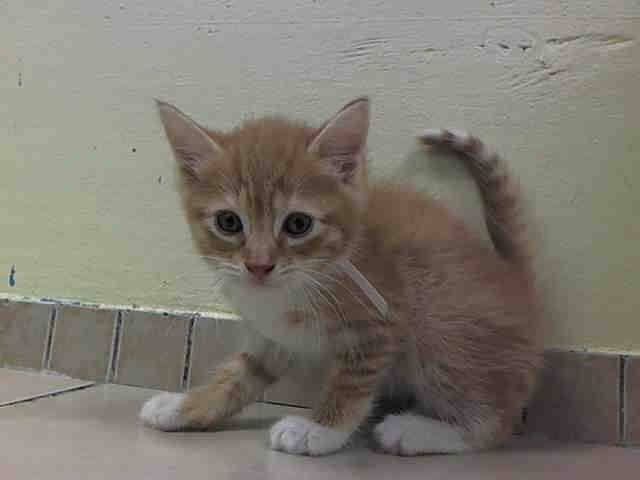 TO BE DESTROYED 7/9/14 ** BABY ALERT! ONLY 7 WEEKS OLD
