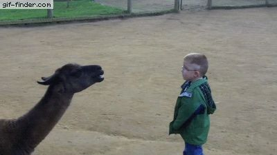 Llama spits in kid's face | Gif Finder – Find and Share funny animated gifs