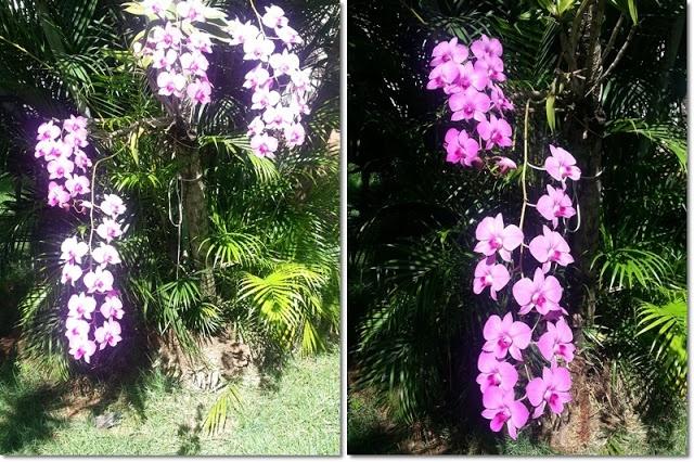 blog v@ LOOKS | por leila diniz: vestido rosa bebê + cintura marcada + pitaya + orquídea em pencas + Arnaldo Jabor