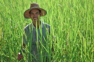 Fairtrade ris