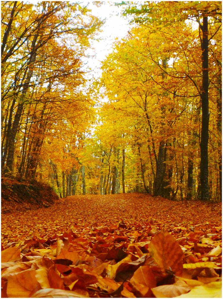 autumn - Kakavos mountain, Chalkidiki, Greece