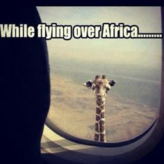 85242930b3c7ae5bf8975cc1fa7a0771 giraffes zebras best 25 airplane humor ideas on pinterest how to laugh, public,Flying Funny Airplane Meme