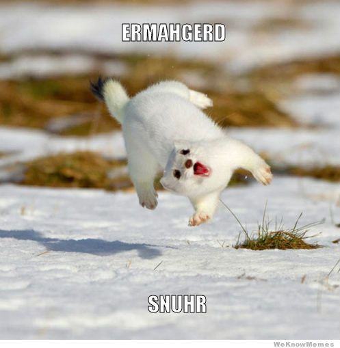 ermahgerd ermagerd: Ferrets, Happy Dance, Barrels, Funny Animal Pictures, Happy Animal, Snow, Funny Stuff, So Funny, Funnystuff