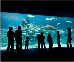 Check out the NC Aquarium on your next vacation to Atlantic Beach, NC