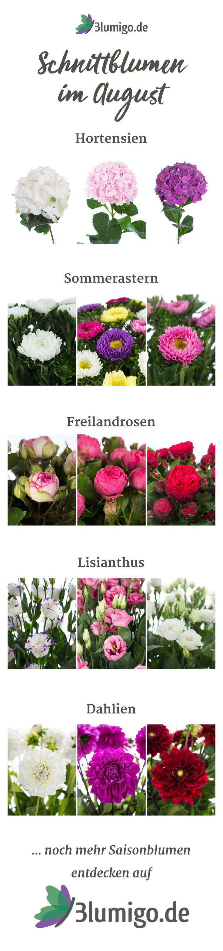 Welche Blumen gibt es im August? Schnittblumen Saison-Kalender
