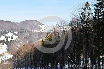 Tall trees diagonally oriented and scenic view of mountains.