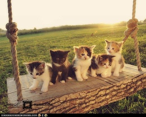 awww!!: Cat, Animal Baby, Pet, Baby Animal, Funny Animal, Summer Fun, Cute Kittens, Baby Kitty, Adorable Animal