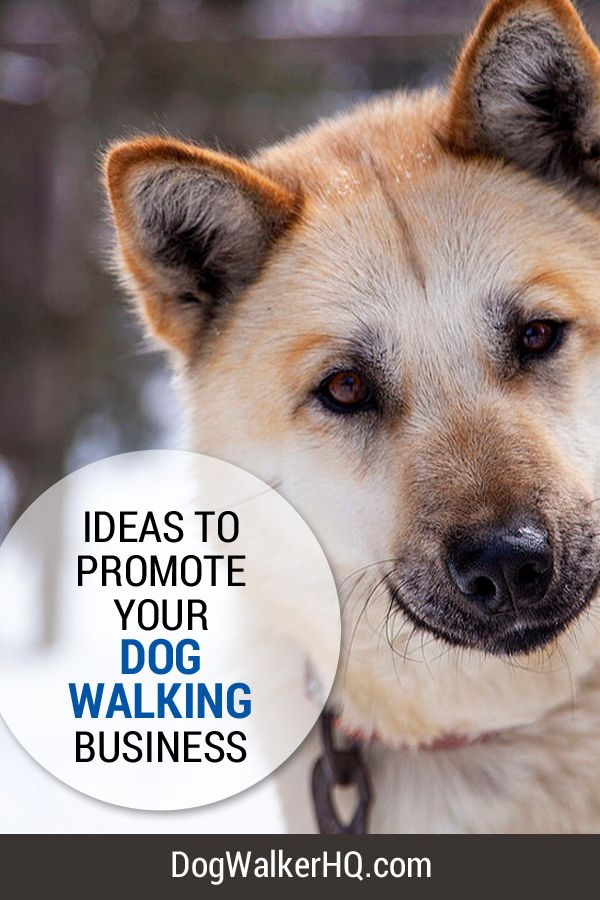 Ideas to Promote your Dog Walking Business