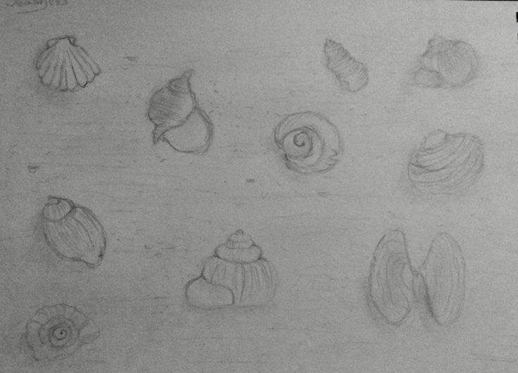 Pinterest inspired seashell sketch. Pencil.