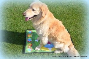 CARPETTHERAPY and help to pets http://www.49lley.com/n/carpettherapy-and-help-to-pets