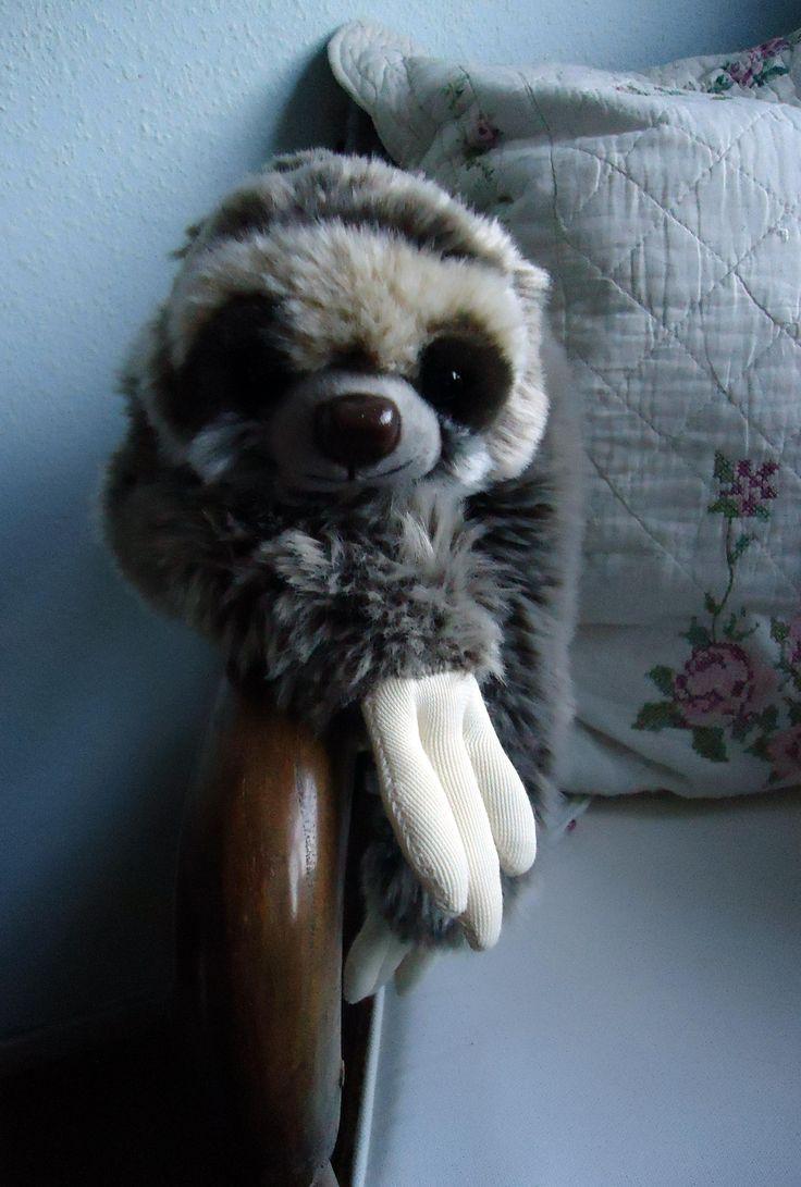 Hanging around #SlothLove# May 2016# Maurice the Sloth# KET