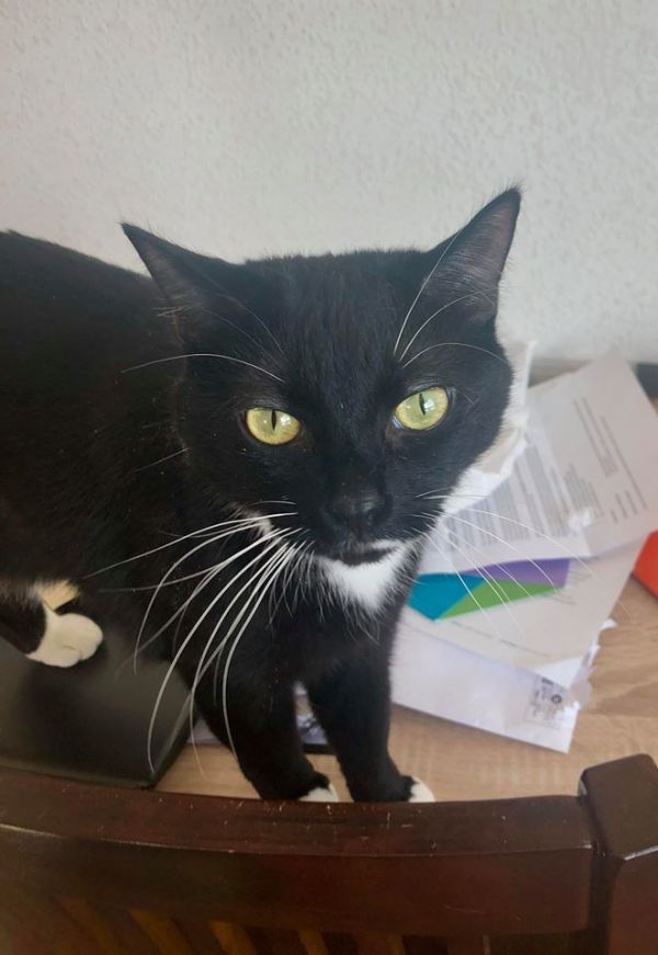 Pets For Adoption Near Edmonton Ab Petfinder Pet Adoption Cute Animals Cat Rescue
