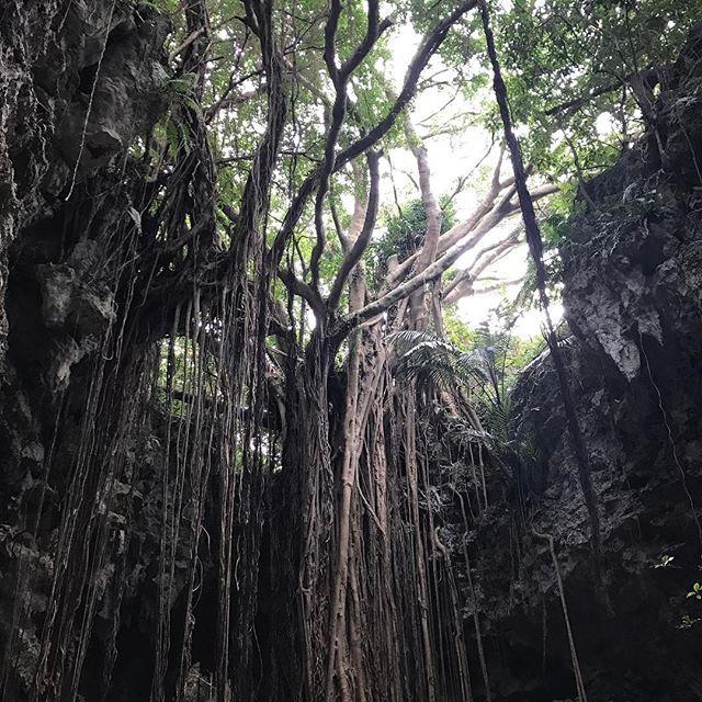 【risa.u.u】さんのInstagramをピンしています。 《がじゅまるの木 垂れてる枝が土まで伸びてそっから土の栄養もらって幹が太くなってどんどん大きくなるらしい🤓 がじゅまるもすごいけど、洞窟がやばかった!! 真っ暗やけどランプもって進んで行く感じ!! ほんまにこういう自然なものすきおもしろい . そして今の歴史の教科書で習う世界最古の人種はアウストラロピテクスではないらしい トゥーマイ猿人! って何回かガイドさんに言わされた笑 #ガンガラーの谷#がじゅまる#自然#森#洞窟#マイナスイオン#港川人#アウストラロピテクス#トゥーマイ猿人#世界最古#人類#沖縄#okinawa#japan#travel》