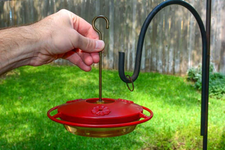 Putting out a hummingbird feeder full of nectar
