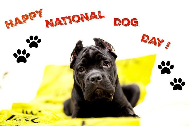 National Dog Day | Walks With Rama | Bloglovin'