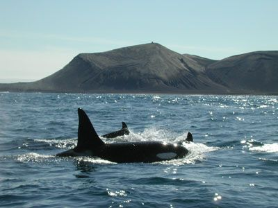 80 Best Images About Iceland Surtsey On Pinterest