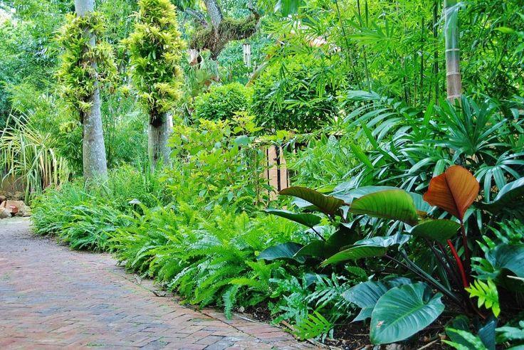 Tropical landscape design miami with green ferns congo for Landscape design miami