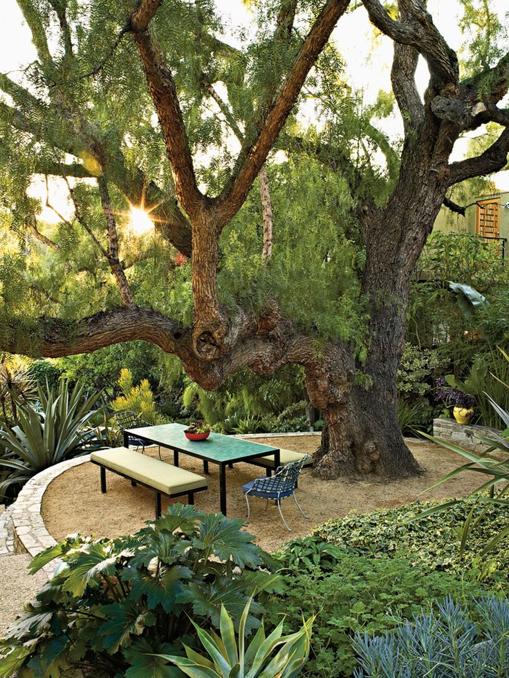 California pepper tree is surrounded by acanthus, agave and other plants