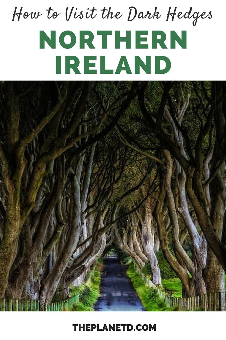 Tips for visiting the Dark Hedges in Northern Ireland. Located near Ballymoney in County Antrim and made famous by Game of Thrones, visit a road lined and covered with twisted branches. This site is any photography lover's dream. Bucket list travel in Northern Ireland. | Blog by the Planet D #NorthernIreland