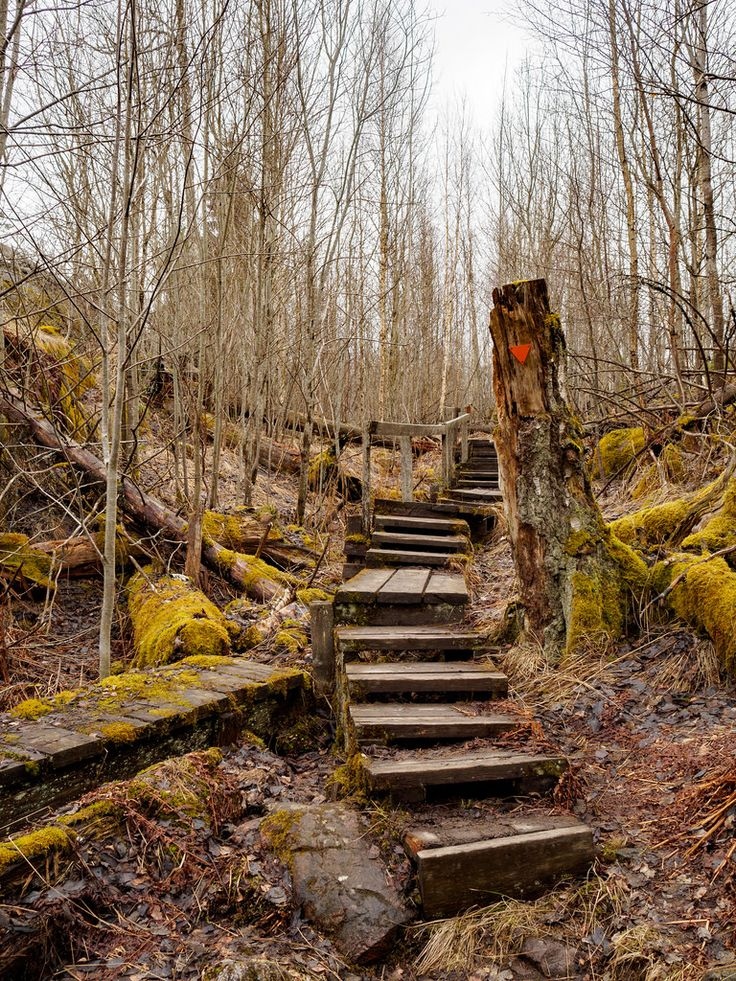Daniel Turull posted a photo: Tyresta hike with meetup group