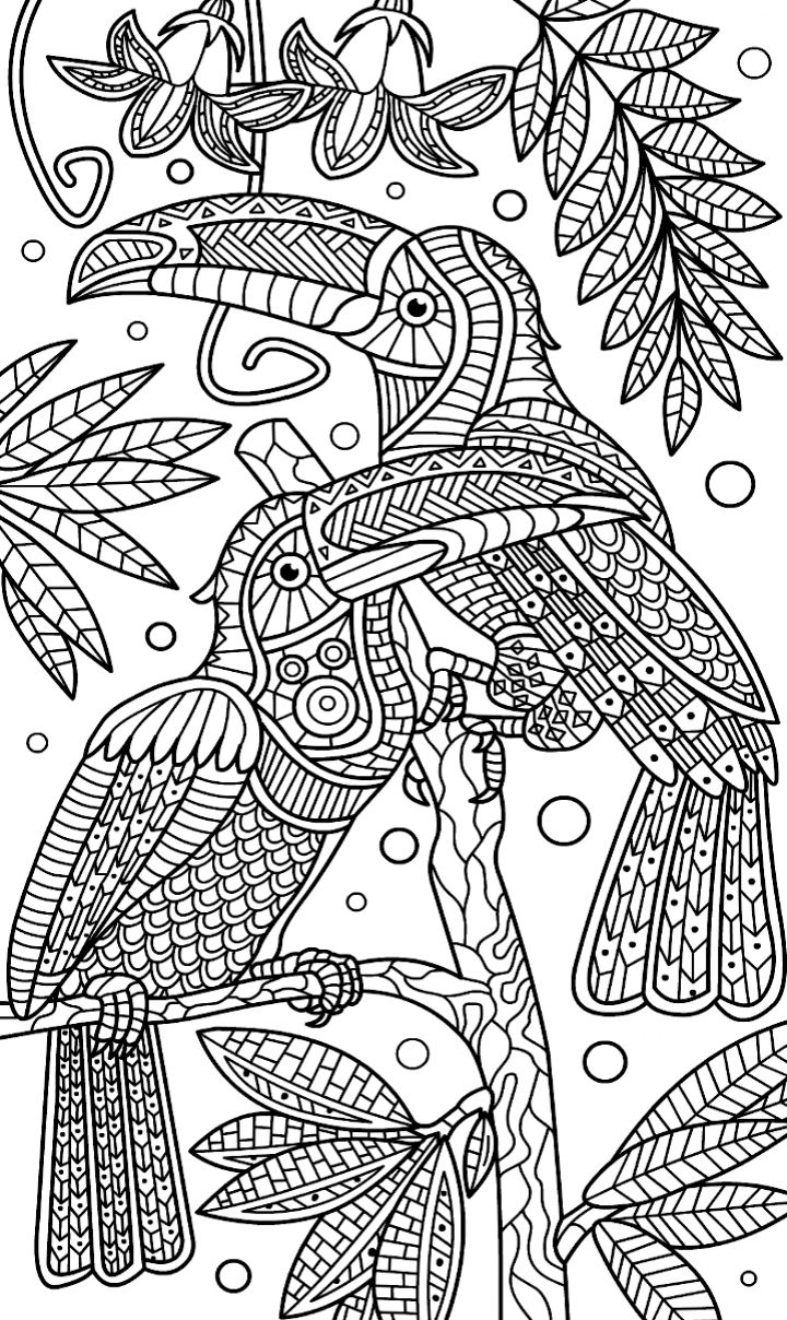234 best coloring parrot images on Pinterest | Adult ...