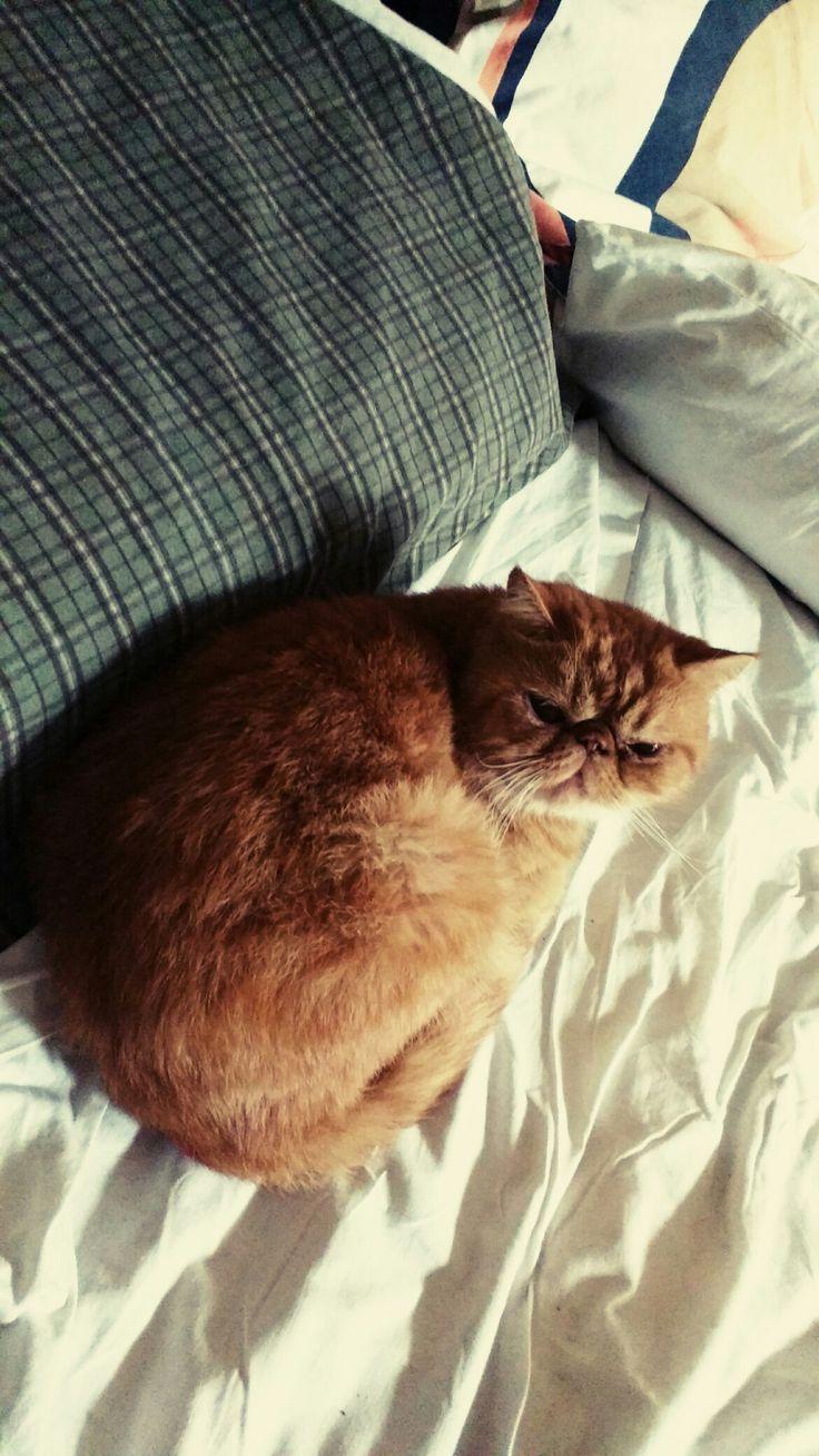 Garfield es un poco tímido pero muy bueno!