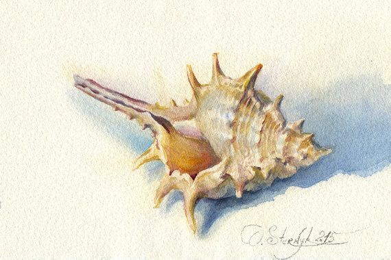 """Seashell painting - sea shell watercolor - """"Crimean seashell"""", paper"""