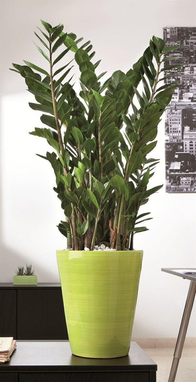 Moderne Zimmerpflanzen Als Frische Deko Furs Zuhause Dekoration