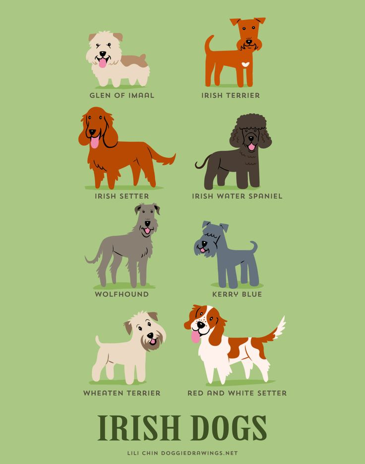 IRISH DOGS art print dog breeds from Ireland by doggiedrawings