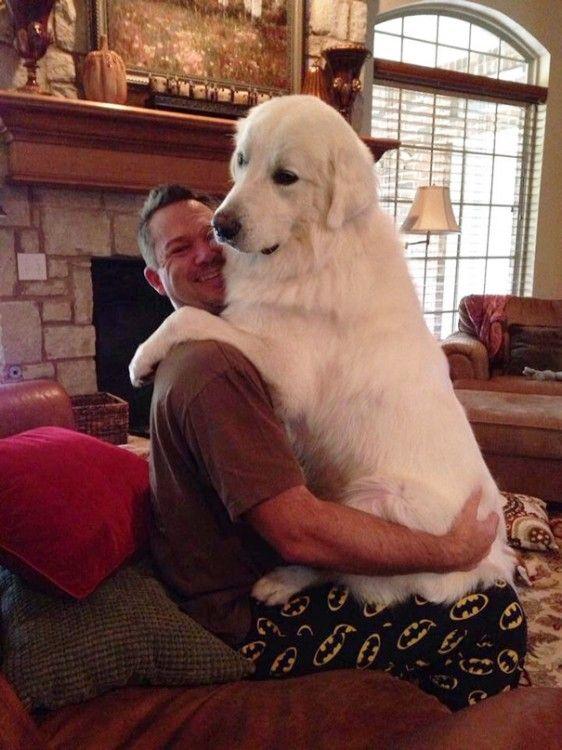Perros Grandes (Gigantes)