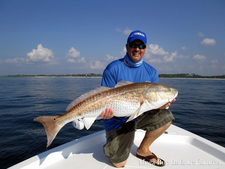 82 best fishing the gulf of mexico images on pinterest for Fishing charters mexico beach fl