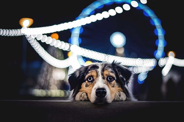 Dogs Can See Better In Low Light Than Humans Due To An Extra Light