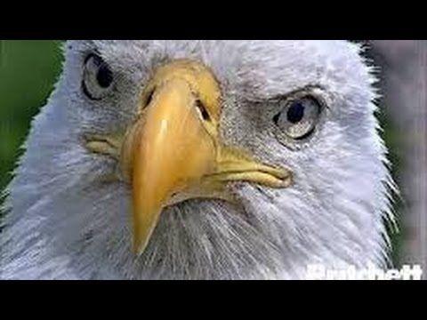 Southwest Florida Eagle Cam - (More info on: http://LIFEWAYSVILLAGE.COM/how-to/southwest-florida-eagle-cam-2/)