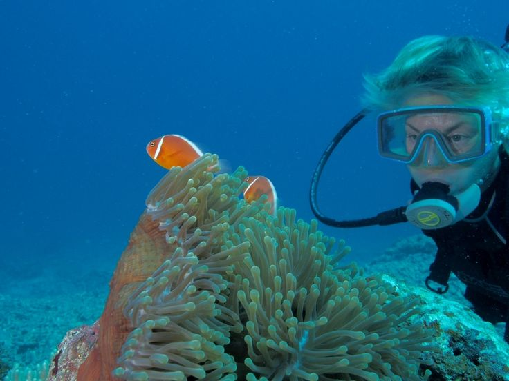 diver and clown fish