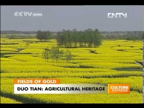Duo Tian, officially becomes Chinas agricultural heritage