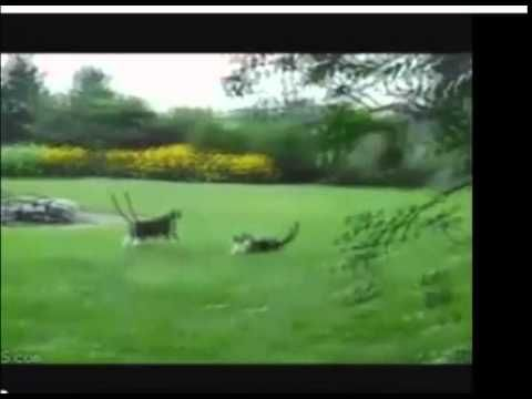 Video Lucu Kucing dan Anjing http://www.youtube.com/watch?v=oIUZ28ScxdY&feature=youtu.be