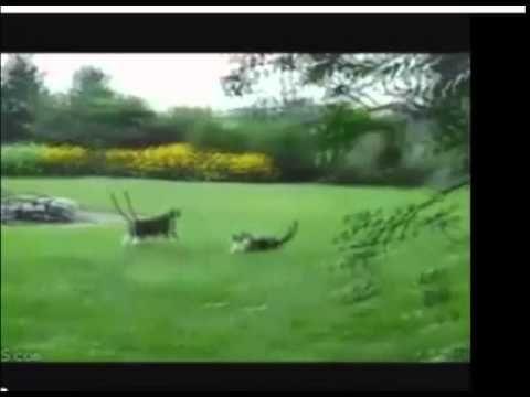 Video Lucu Kucing dan Anjing http://www.youtube.com/watch?v=oIUZ28ScxdY&feature=youtu.be