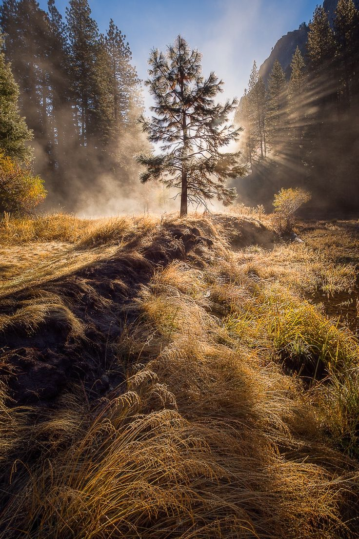 ~~Yosemitree | Yosemite National Park, California | by Toby Harriman~~