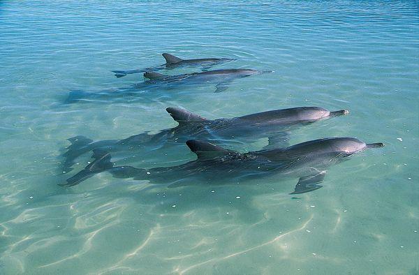 The dolphins at Monkey Mia
