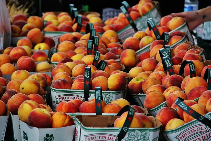 The Peach Festival -   Niagara-on-the-Lake is a pretty peachy place to be. At least, that's the way I feel. Last Saturday, lots of others thought so too. It was the 26th Annual Peach Festival. At events like this, …