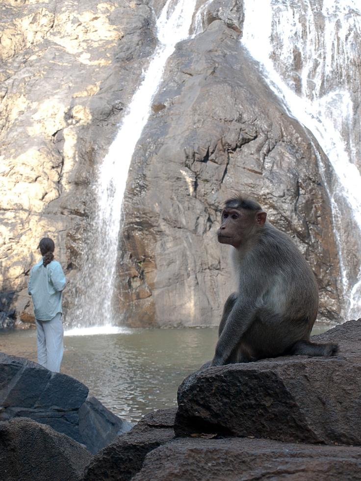 Dudhsagar Waterfalls trip #Goa #India www.masalaherb.com