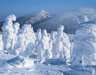 """""""Ice monsters"""" on Mount Jizo, Japan. Trees covered in snow and ice."""